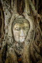 Ancient buddha entwined within tree roots in thailand head from ruins of an abandoned temple of wat mahathat the of a famous Stock Photography