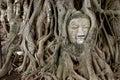 Ancient Buddha image  tree Royalty Free Stock Photos
