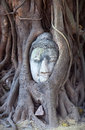Ancient Buddhas Head in Tree Roots in Ayutthaya, Thailand Royalty Free Stock Photo