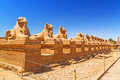 Ancient egyptian statues in karnak temple of ram headed sphinxes Royalty Free Stock Photography