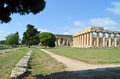 Ancient greek temples and trees in southern italy Stock Images
