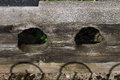 Ancient old wooden stocks detail of an stock england Stock Images