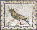 Ancient roman mosaic representing a parrot sevilla heron from the archaeological site of italica near it was on the floor of house Stock Images