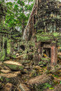 Ancient ruins and tree roots ta prohm temple angkor cambodia high dynamic range hdr image of with trees Royalty Free Stock Images