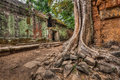 Ancient ruins and tree roots ta prohm temple angkor cambodia high dynamic range hdr image of with trees Royalty Free Stock Photos