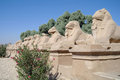 Ancient statues of ram headed sphinxes in karnak temple luxor Stock Photo