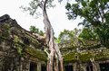 Ancient stone construction and tree roots, Ta Prohm temple ruins, Angkor, Cambodia Royalty Free Stock Photo