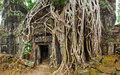 Ancient stone door and tree roots ta prohm temple angkor camb panorama of ruins cambodia Stock Photo