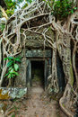 Ancient stone door and tree roots ta prohm temple angkor camb travel cambodia concept background ruins cambodia Stock Photography