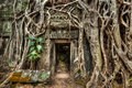 Ancient stone door and tree roots ta prohm temple angkor camb travel cambodia concept background ruins cambodia Stock Image
