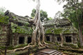 Ancient Ta Prohm Temple Royalty Free Stock Photo