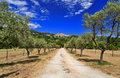 Ancient turrets and towers of the beautiful medieval french mountain village of callian above an avenue of olive trees var Stock Photo