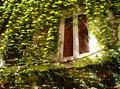 Ancient window decorated by green ivy italy Royalty Free Stock Photo