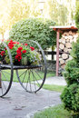 Ancient wooden cart at village with flowers on it. Royalty Free Stock Photo