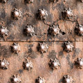 Ancient wooden spiked door detail i Royalty Free Stock Photo