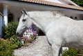Andalusia Horse in the garden Royalty Free Stock Photo