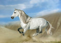 Andalusian stallion in desert white running Stock Images