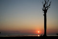 Andaman sunset a on neil island enhances the beauty of a barren tree on the beach taken at neil island islands india Royalty Free Stock Photography