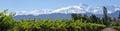 Andes & Vineyard, Lujan de Cuyo, Mendoza Royalty Free Stock Photo