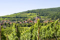 Andlau (Alsace) - Vineyards Stock Photo