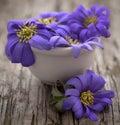 Anemone Blanda Blue Royalty Free Stock Photo