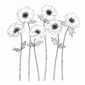Anemone flowers drawing and sketch with line-art Royalty Free Stock Photo