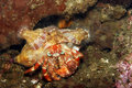 Anemone Hermit crab Royalty Free Stock Photo