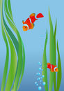 Anemonefish Stock Images