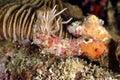 Anemones mabul island sabah coral Royalty Free Stock Photography