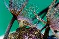 Anemones in ocean water Royalty Free Stock Photo