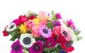 Anemones on white Royalty Free Stock Photo