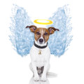 Angel dog feather wings aura Royalty Free Stock Photos