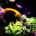 Angel fish in marine tank Royalty Free Stock Images