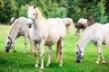 Angel horses undrer rain Royalty Free Stock Photo