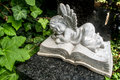 Angel sleeping on a book Royalty Free Stock Photo