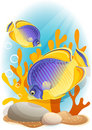 Angelfish Royalty Free Stock Photos