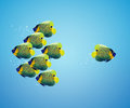 Angelfish in difference way Stock Images