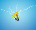 Angelfish jumping Stock Photography