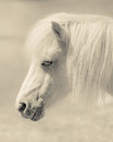Angelic Pony Portrait Royalty Free Stock Photo