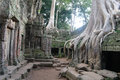 Angkor cambodia trees grown into the temple thom Stock Images