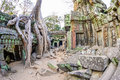 Angkor wat a large jungle tree covering the stones of the temple of ta prohm in siem reap cambodia Stock Photo