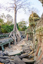 Angkor wat a large jungle tree covering the stones of the temple of ta prohm in siem reap cambodia Royalty Free Stock Photography