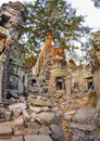 Angkor wat a large jungle tree growing among the stones of the temple of ta prohm in siem reap cambodia Stock Image