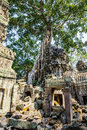 Angkor wat a large jungle tree growing on top of the buildings of the temple of ta prohm in siem reap cambodia Stock Photo