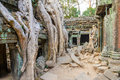Angkor wat a large jungle tree growing on top of the buildings of the temple of ta prohm in siem reap cambodia Stock Images