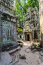 Angkor wat a large jungle tree next to the carvings in the temple at ta prohm in siem reap cambodia Stock Image