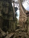 Angkor Wat in Siem Reap, Cambodia. Ancient ruins of Khmer stone temple overgrown with the roots and giant strangler fig trees Royalty Free Stock Photo