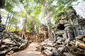 Angkor wat the sun filtering through the jungle canopy above the temple of ta prohm in siem reap cambodia Royalty Free Stock Photography