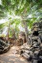 Angkor wat the sun shining through the jungle canopy above the temple of ta prohm in siem reap cambodia Stock Photos
