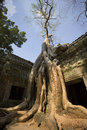 Angkor Wat - tempiale dell'AT Prohm - la Cambogia Immagine Stock